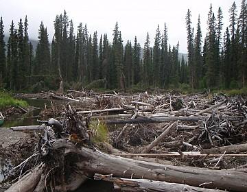Log jam at head of river