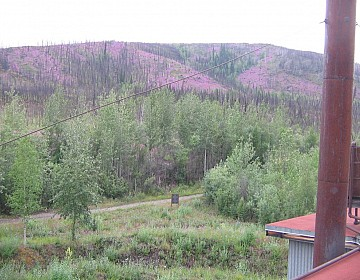 View from dredge with fireweed covering the hills